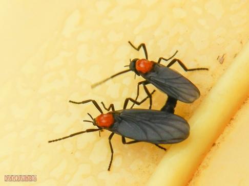 Lovebug Mates
