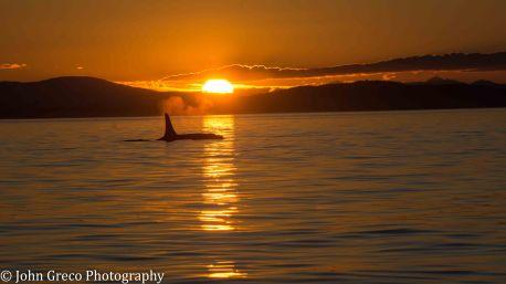 Orca Sunset_DSC4762_CW-4762
