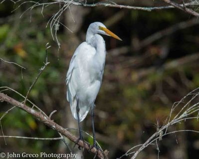 egret-corkscrew-1-of-1