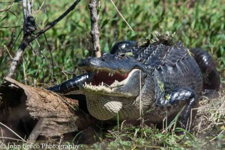 gator-country-dsc3118-1-of-1