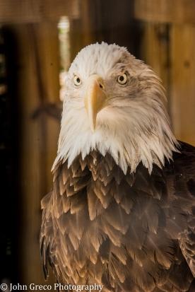 Eagle3 (1 of 1)