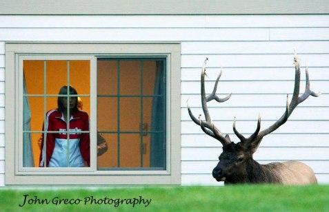 Outside my Window_DSC_1132-CR