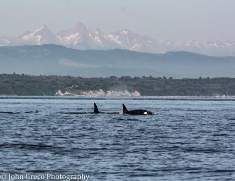 Orcas Afj-5007