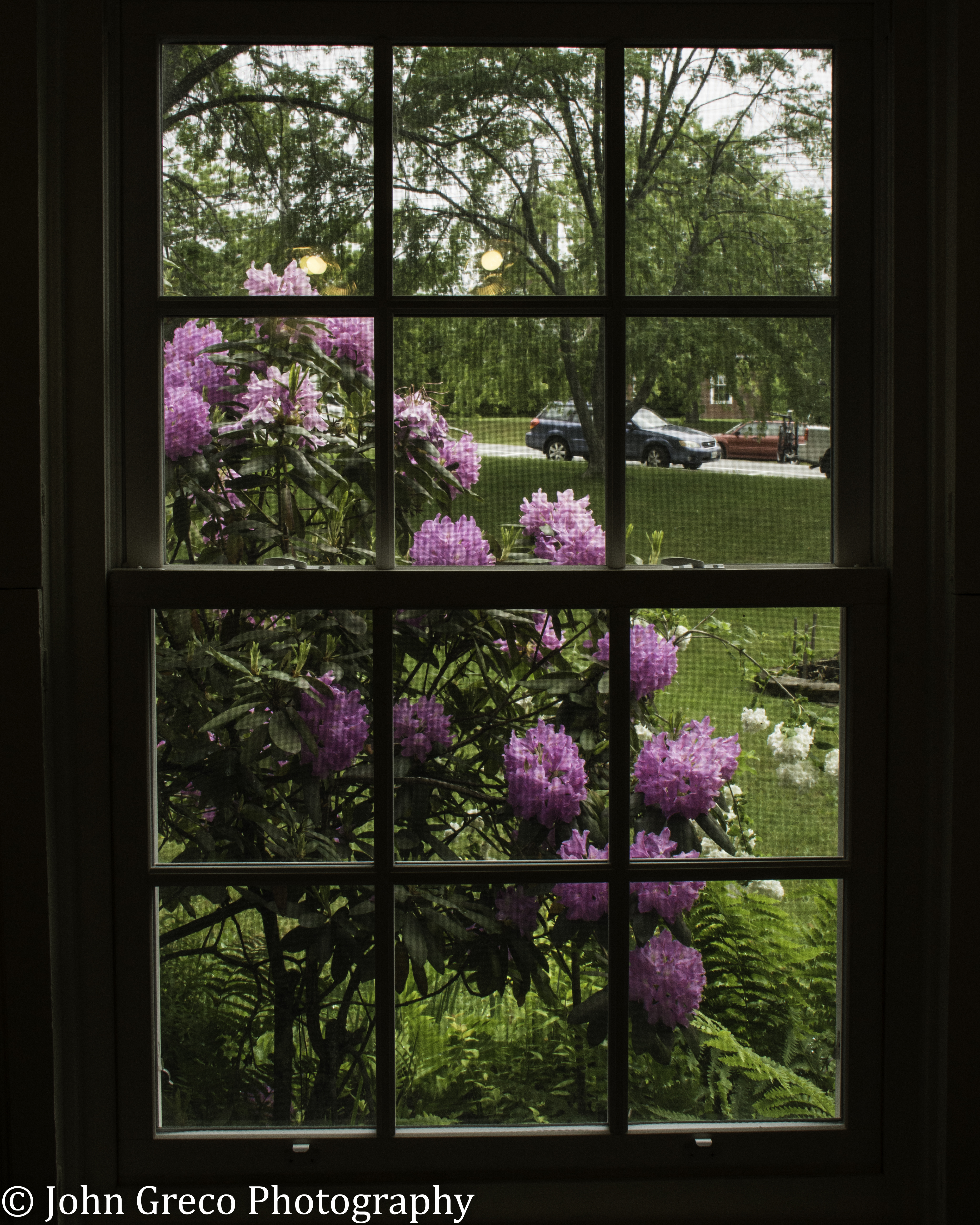 View From Inside Ellesworth Library-4468