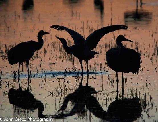 Sandhill Cranes NM Sunset-DSC2137-CW