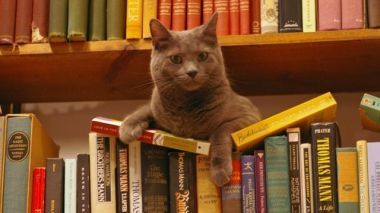 cats in book