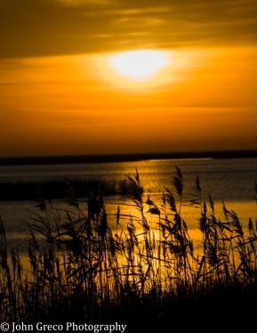 Sunrise2 Bombay Hook NWR Delaware CW-1571