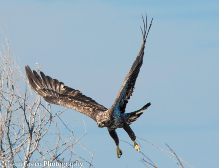 Eagle is Landing-3247
