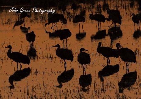 Sandhill Cranes_DSC_2195_CR