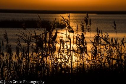 Sunrise Bombay Hook NWR Delaware CW-1572.jpg