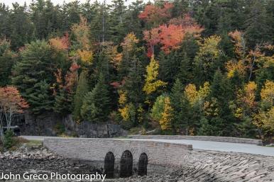 Acadia Natl Park CW-3741