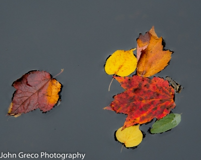 Autumn Leaves CW-3892