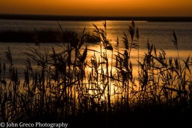 Sunrise Bombay Hook NWR Delaware CW-1572