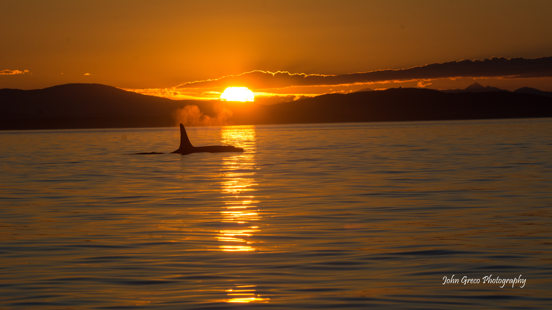 Orca Sunset_DSC4762-4762-001-CW-001